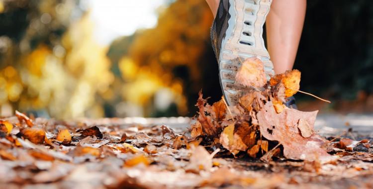 Autumn_Closeup_Athletic_449454